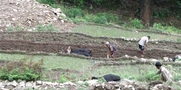 les gents nepalais travail sur les terrins